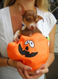Dog Costumes - Dogs in Costumes | Helen Woodward Animal Center