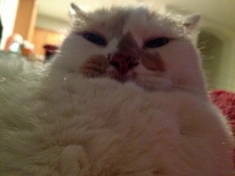 """Moses, an adopted """"Fat Cat,"""" shows off his likeness of Jabba the Hutt."""