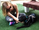 Shea, Rio's temporary foster, says goodbye to her four-legged friend.
