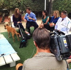 Jeff Zevely and Channel 8 San Diego covered Rio's Adoption Ceremony