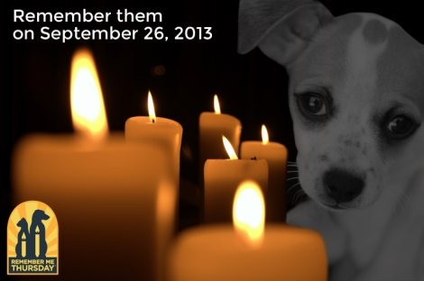 Light A Candle For Pets