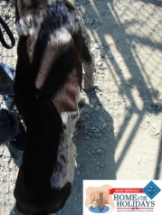 Kane, now Zeus, was found emaciated and wounded.