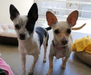 Wiggles (right) and her friend, Maxine (left)