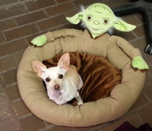 """Wiggles and her beloved """"Yoda Bed"""""""