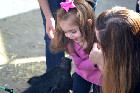 """Pebbles, an adopted """"Fair Pig,"""" spreads good cheer and pet adoption education at Helen Woodward Animal Center"""
