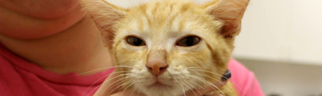 Almond Joy adopted from Naples Cat Alliance