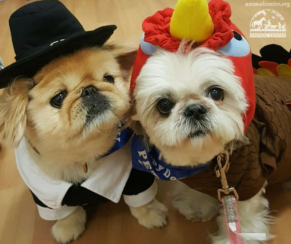 Thanksgiving Costumes for Dogs - Animal Shelter Holiday Marketing Ideas