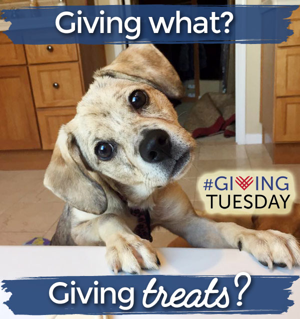 Giving Tuesday tips for animal shelters